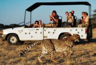 Africa Travel To Enjoy Wildlife And African Safari!