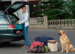Precautionary Measures To Reduce The Risks While Traveling With Pets!