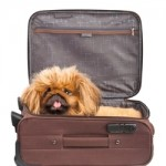 5 Tips To Keeping Your Pet Safe If You Absolutely Have To Fly With Them