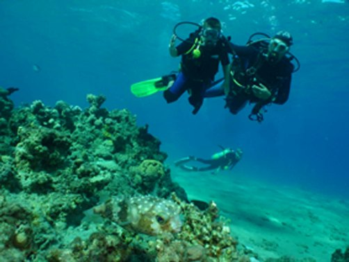 red sea dive