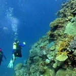 Scuba Diving Can Be The Right Way To Experience Life