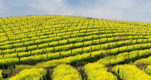 California Wine Country USA