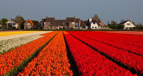 Fabulous Holland