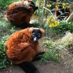 5 of UK's Best Safari Parks and Zoos