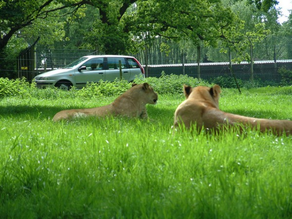 Knowsley-Safari-Park