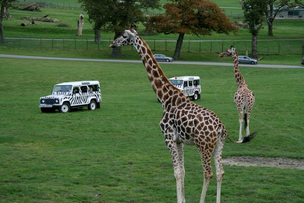 Longleat-Safari