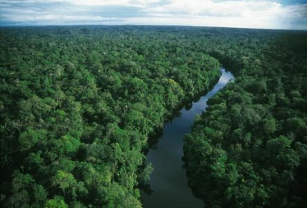 The-Amazon-Rainforests