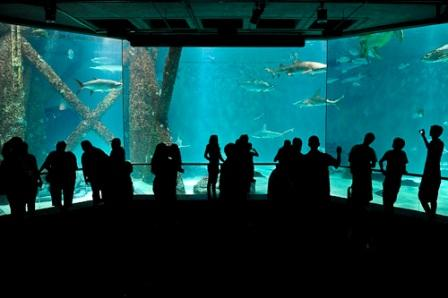 The-Audubon-Aquarium