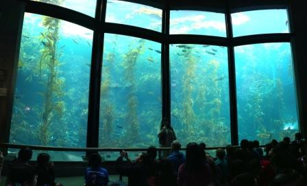 The-Monterey-Bay-Aquarium