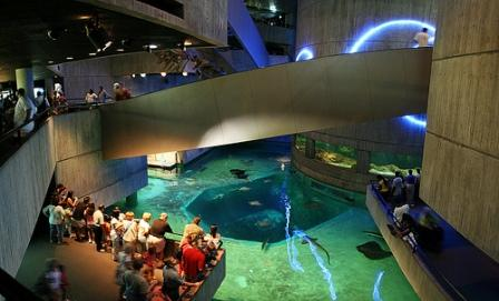 13 Of The World S Best Aquariums The Travelers Zone