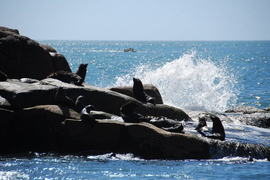 The Sea lion colony