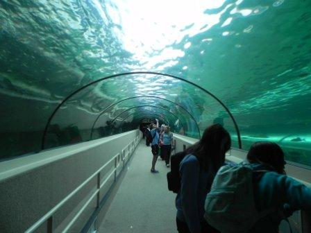 The-Sydney-Aquarium