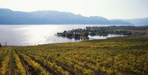 okanagan-valley-vineyards