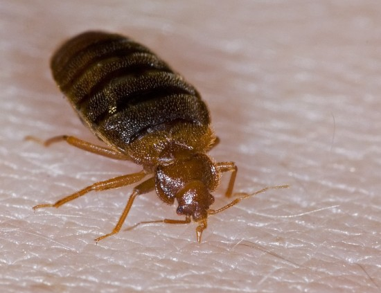 avoid hotel bed bugs
