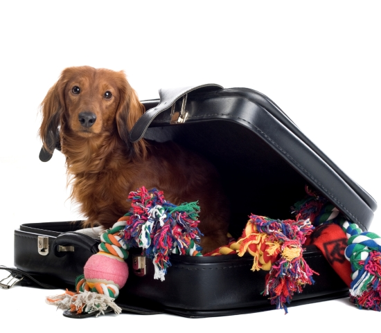 free guide to travelling with your pet