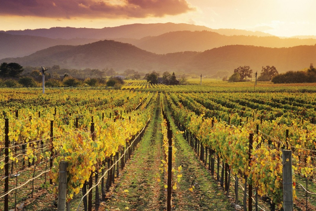 6 Best Things you can do When in Napa Valley